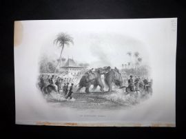 Nolan India C1880 Antique Print. An Elephant Fight